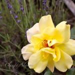 maui-blooms-100527-113906