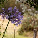 maui-blooms-100527-115340