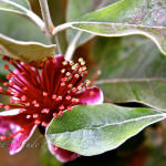 maui-blooms-100527-115631