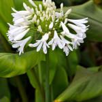 maui-blooms-100527-115931