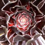 maui-blooms-100527-120151