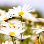 maui-blooms-100527-120952