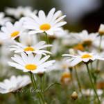maui-blooms-100527-121005