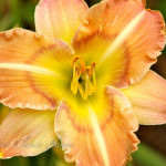 maui-blooms-100527-121044