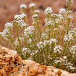 maui-blooms-100527-121351